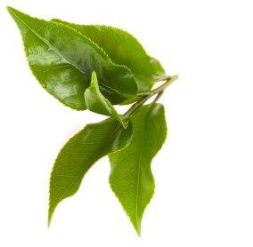 ingredients_green_tea_3