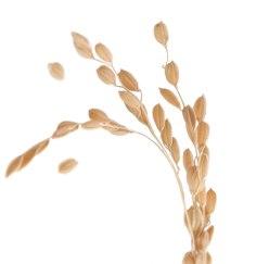 ingredients_rice_bran